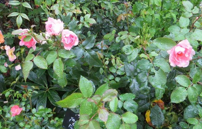 jardin de France Jardin10