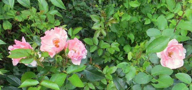 jardin de France Jardin12