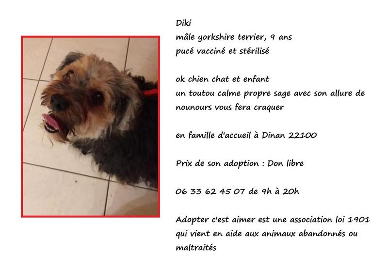 DIKI, mâle yorkshire terrier, 9 ans Diki210