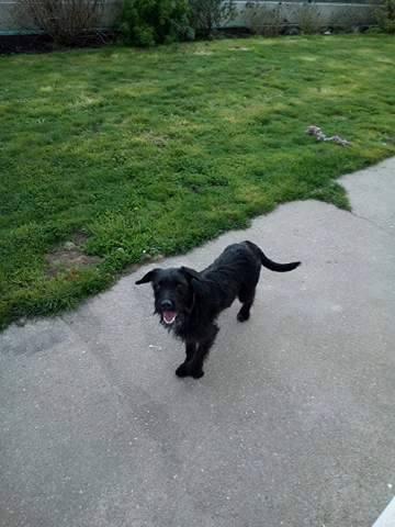 MILKA, chiot femelle type terrier, 7 mois Milka10