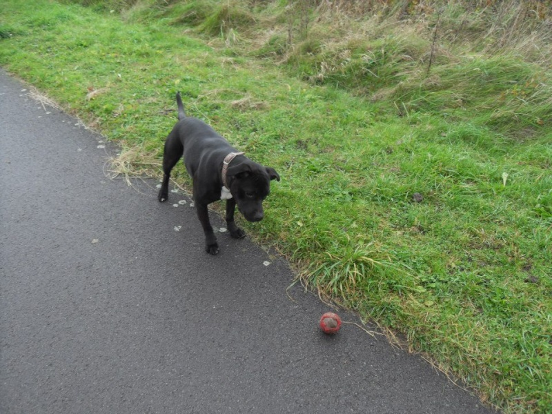Photos that our dog walker Clair took when out and about :) 14630610