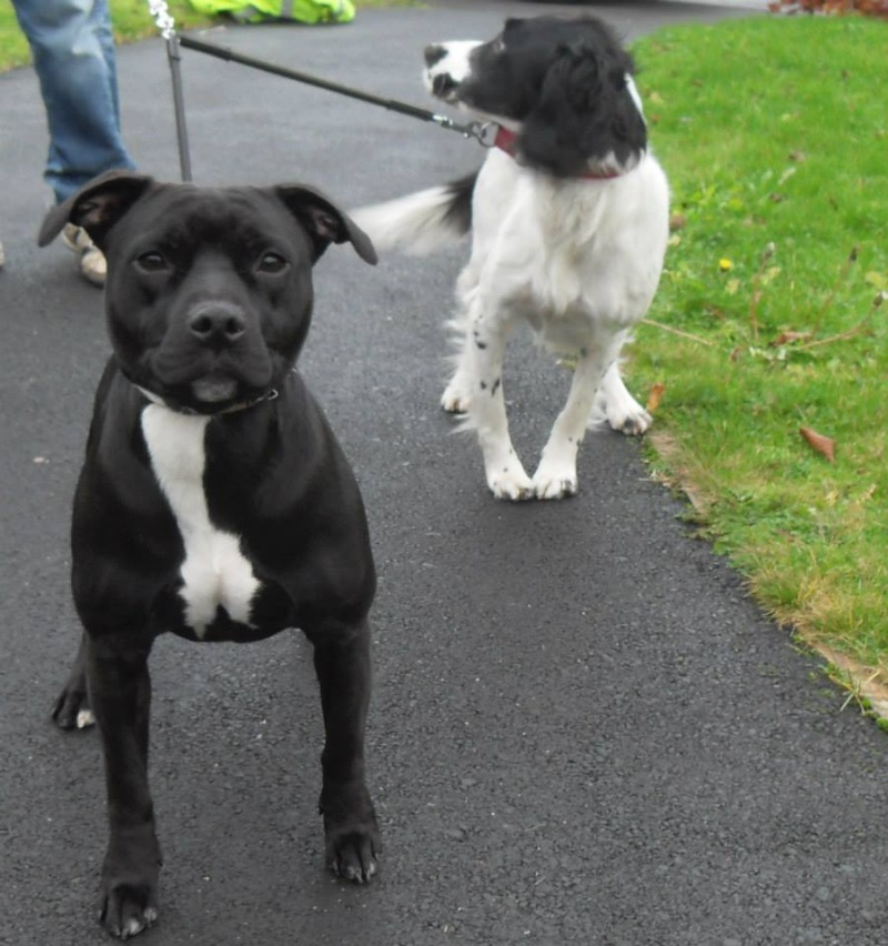 Photos that our dog walker Clair took when out and about :) Moll10