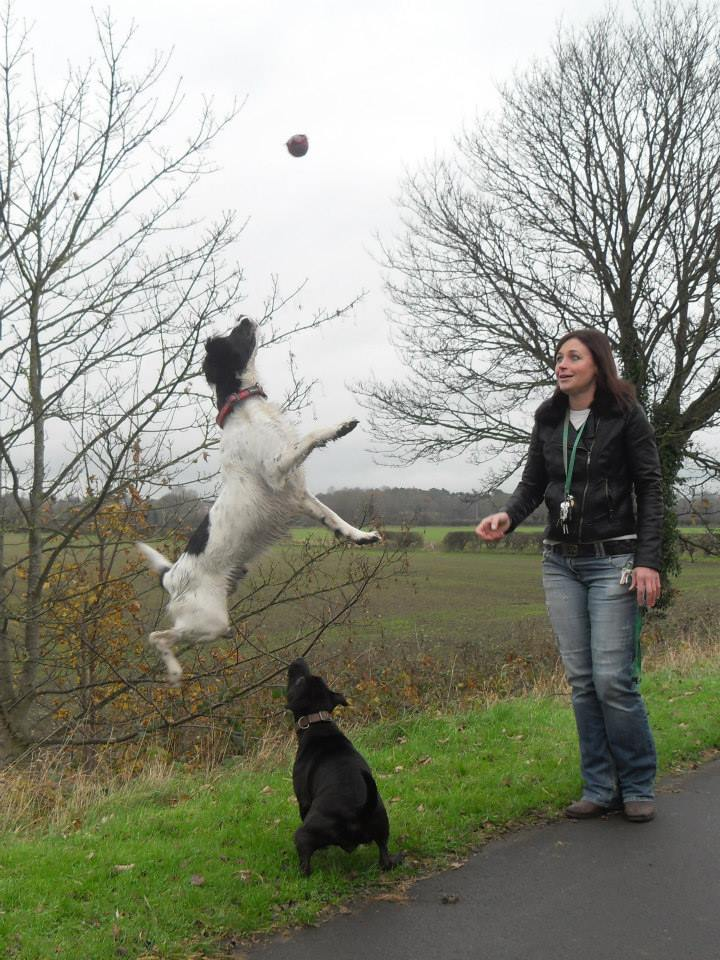 Photos that our dog walker Clair took when out and about :) Pic10