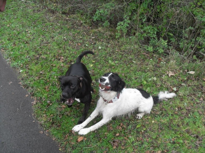 Photos that our dog walker Clair took when out and about :) Watson10