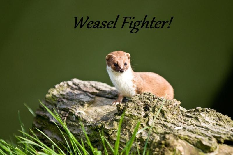Weasel Fighters
