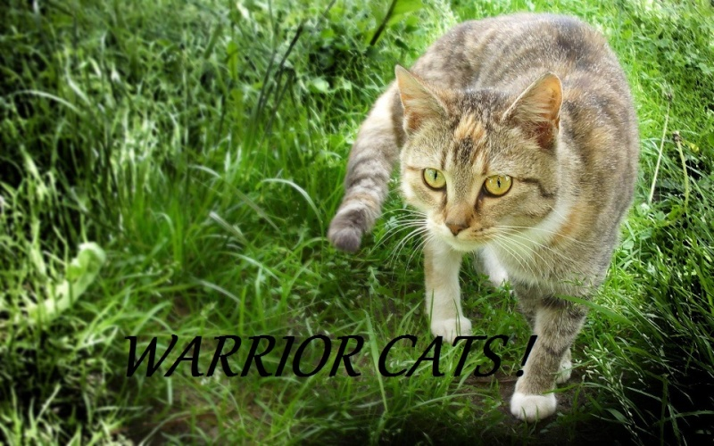 Warrior Cats Wald!
