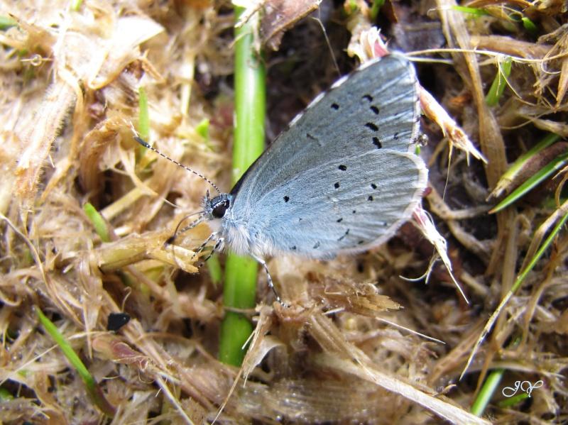 Premières observations de papillons en 2014 - Page 2 Img_0116