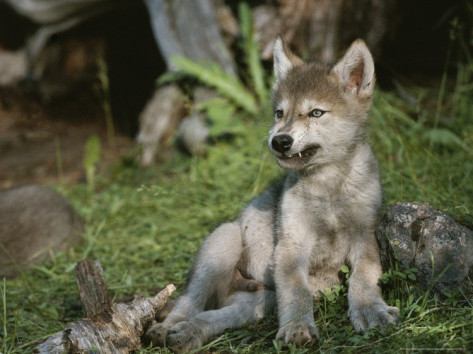 About: Wolf Development Jim-an10