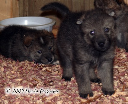 About: Wolf Development Nitach10