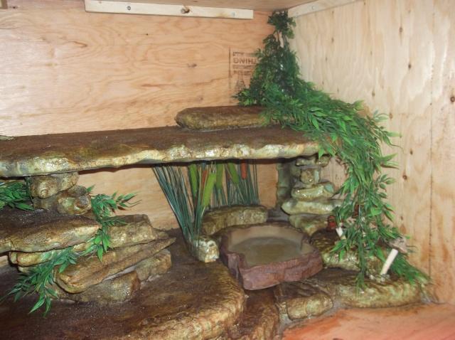 Mon nouveau terrarium Dscf0837