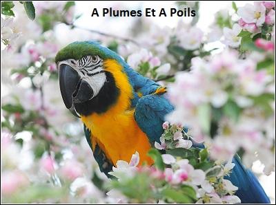 A plumes Et A Poils Ara-ar14