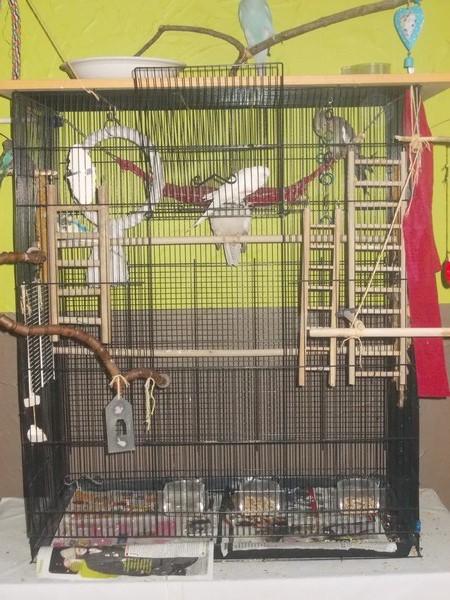 Les installations de vos oiseaux Dscn2712
