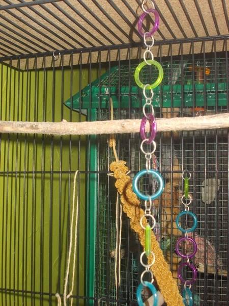 Les installations de vos oiseaux Dscn2716
