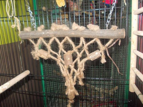 Les installations de vos oiseaux Dscn2717