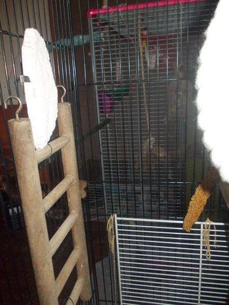 Les installations de vos oiseaux Dscn2718