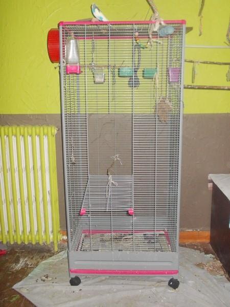 Les installations de vos oiseaux Dscn2721