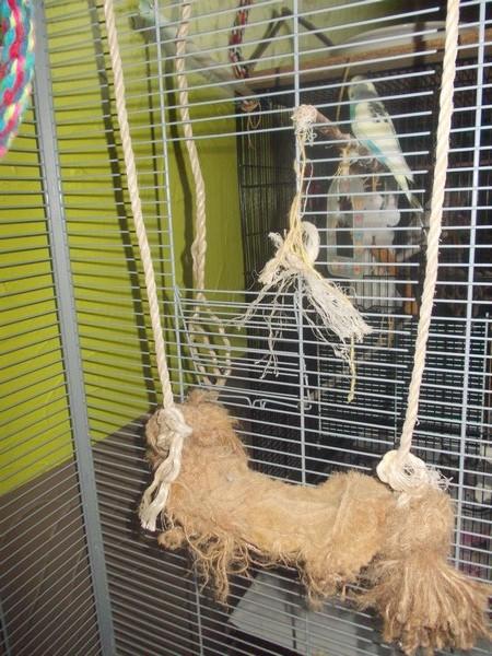 Les installations de vos oiseaux Dscn2725