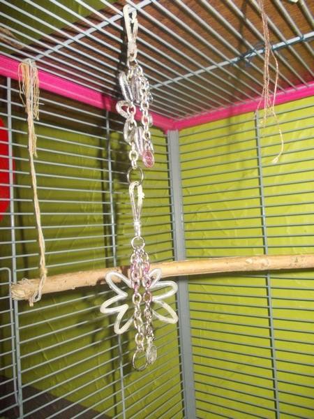 Les installations de vos oiseaux Dscn2729