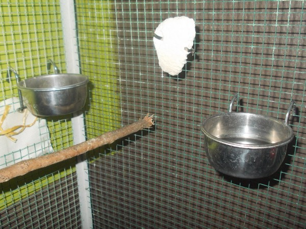 Les installations de vos oiseaux Dscn2732