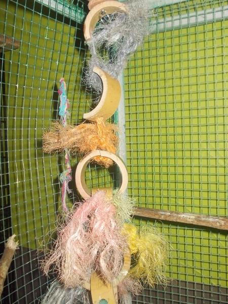 Les installations de vos oiseaux Dscn2734