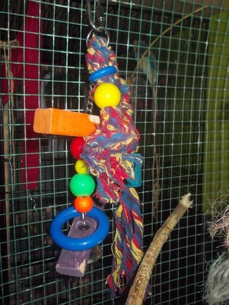 Les installations de vos oiseaux Dscn2735