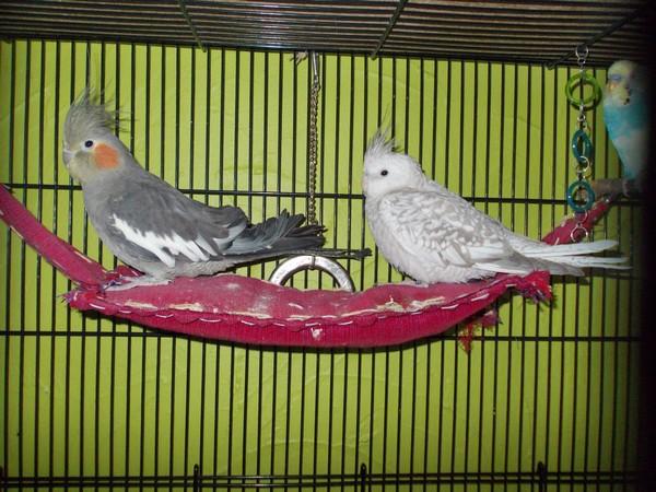 Les installations de vos oiseaux Dscn2810