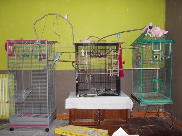 Les installations de vos oiseaux Dscn2811
