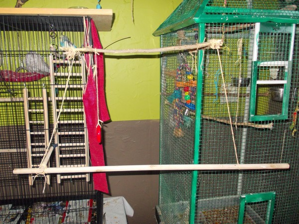Les installations de vos oiseaux Dscn2812