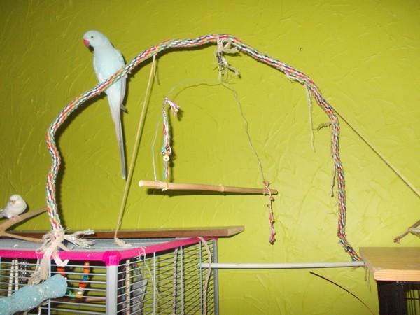 Les installations de vos oiseaux Dscn2817