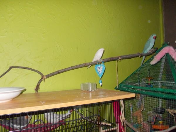 Les installations de vos oiseaux Dscn2819