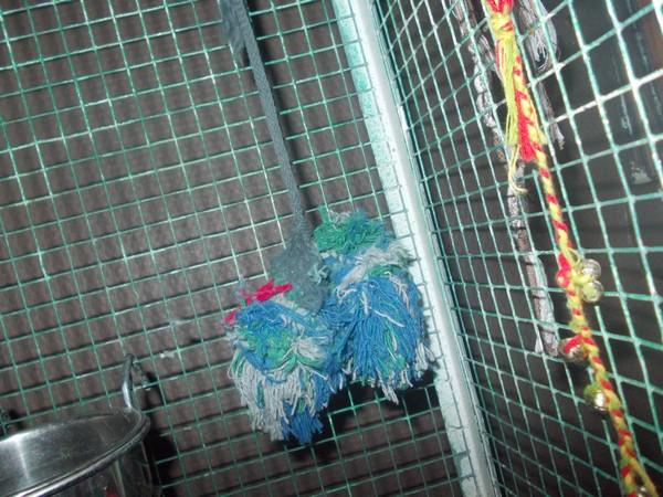 Les installations de vos oiseaux Dscn2822