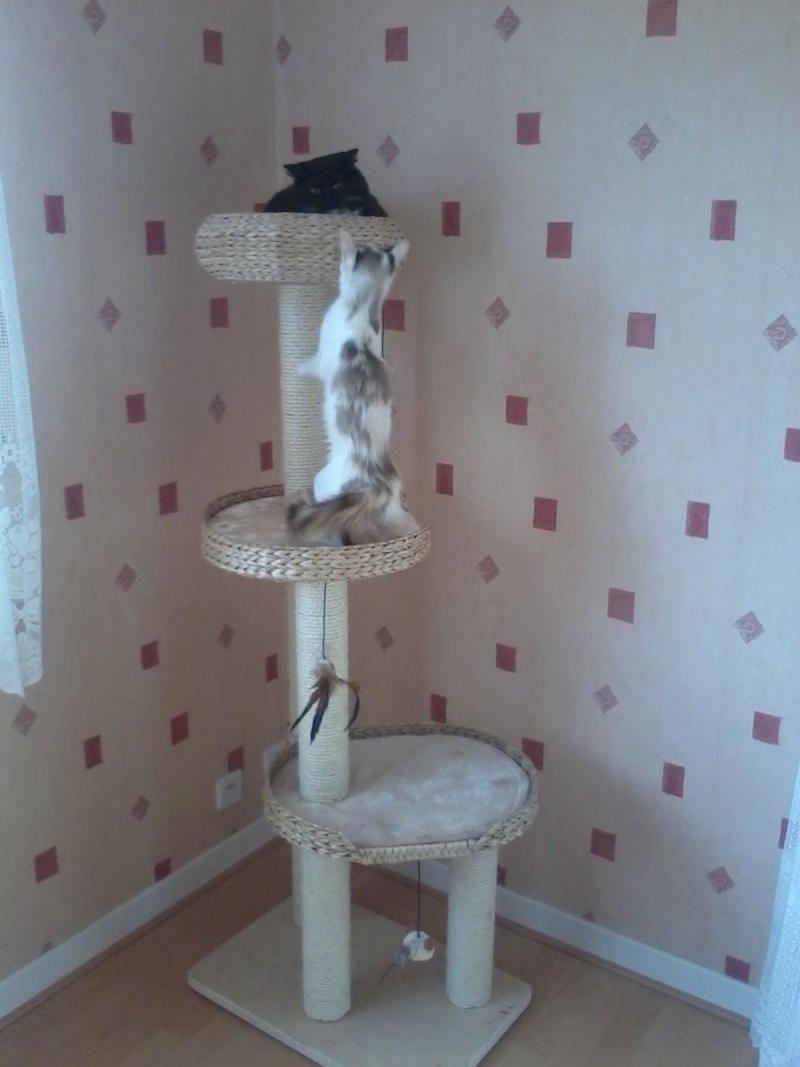 GRATOUILLE, chatte poil mi-long noire et blanche d'un an.  - Page 1 2013-016