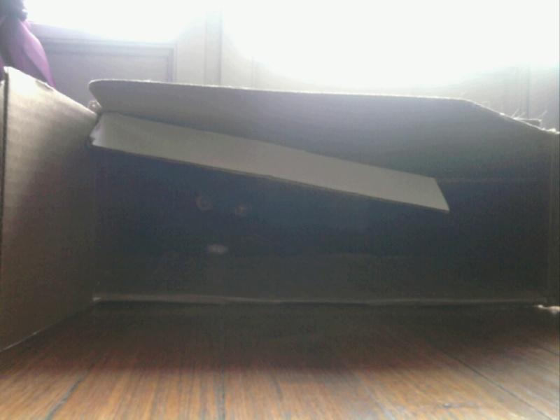 GRATOUILLE, chatte poil mi-long noire et blanche d'un an.  - Page 1 Mms_2012