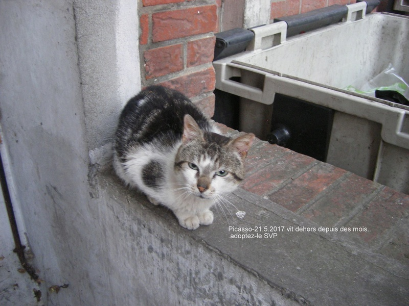 QUI PEUT AIDER CES PAUVRES CHATS - 59 TOURCOING - - Page 2 Picass16