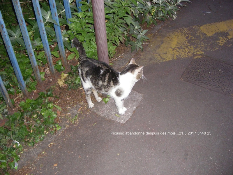 QUI PEUT AIDER CES PAUVRES CHATS - 59 TOURCOING - - Page 2 Picass19