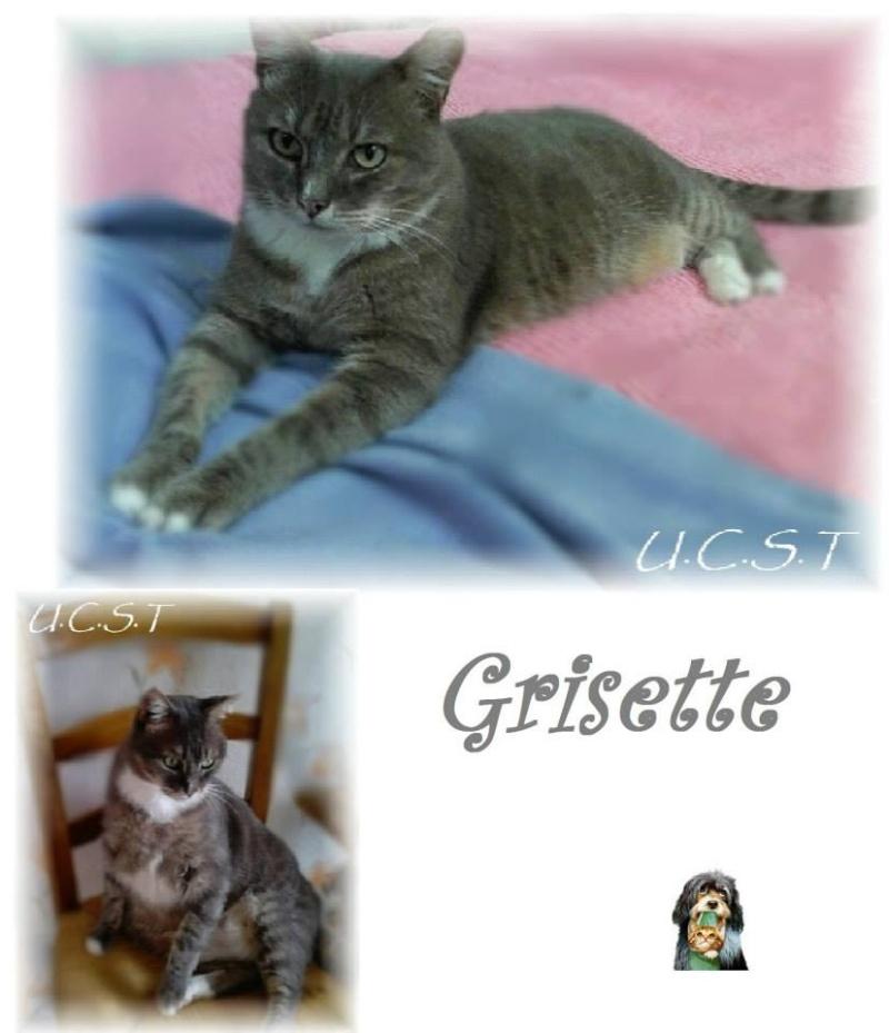 GRISETTE, adorable minette née le 01/11/2003 Griset10