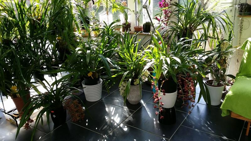 Partage de la technique de ma grand-mère pour soigner ses orchidées 20170236