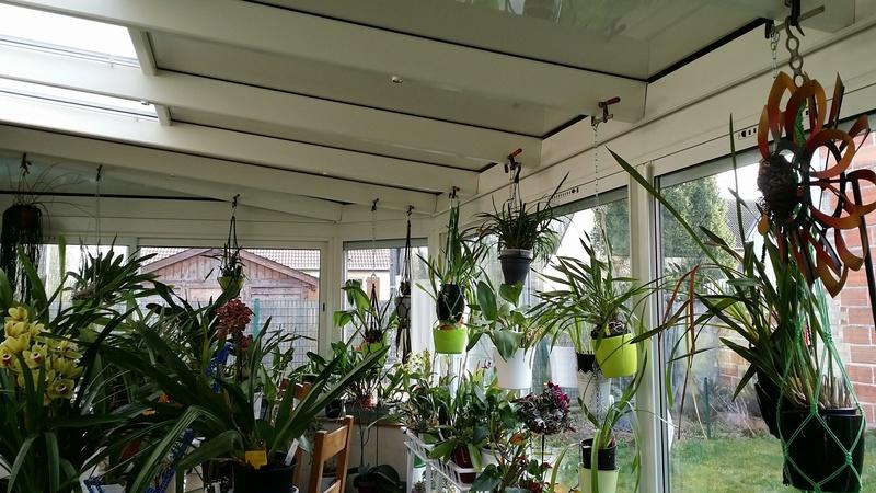 Partage de la technique de ma grand-mère pour soigner ses orchidées 20170333