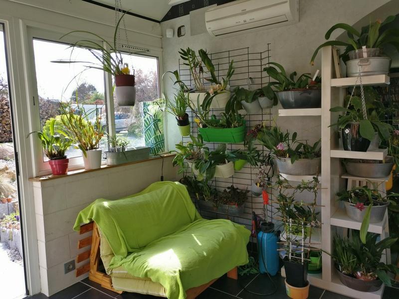 ma véranda, mon petit paradis végétal ... Img_2137