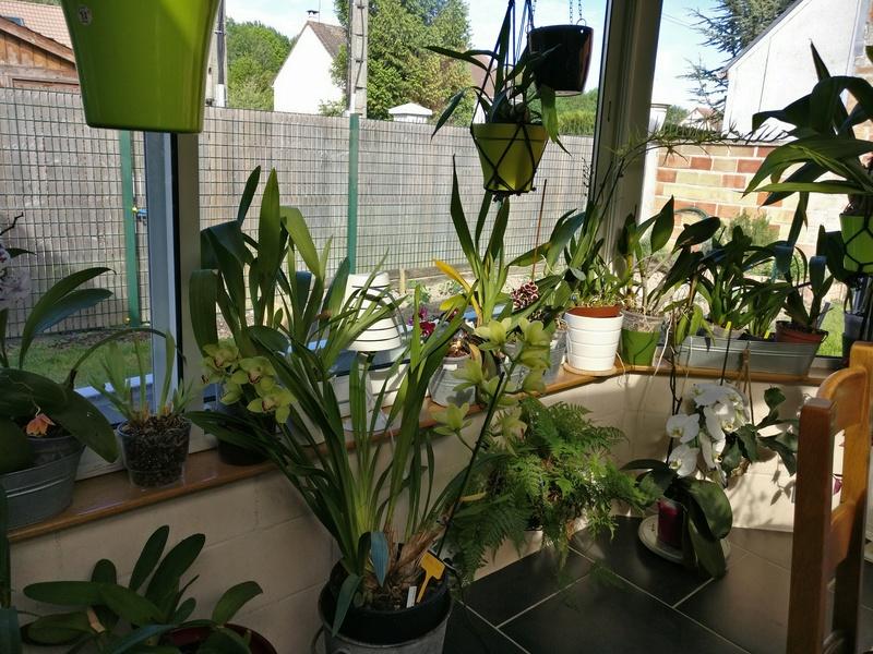 ma véranda, mon petit paradis végétal ... Img_2138