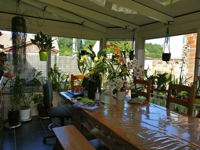 ma véranda, mon petit paradis végétal ... Img_2139