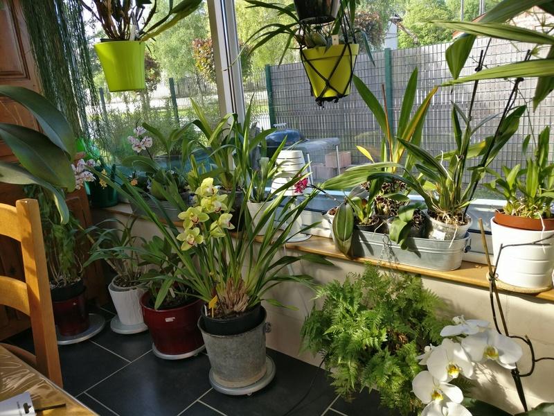 ma véranda, mon petit paradis végétal ... Img_2140
