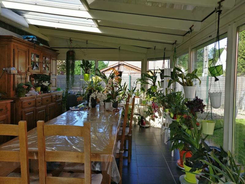 ma véranda, mon petit paradis végétal ... Img_2141