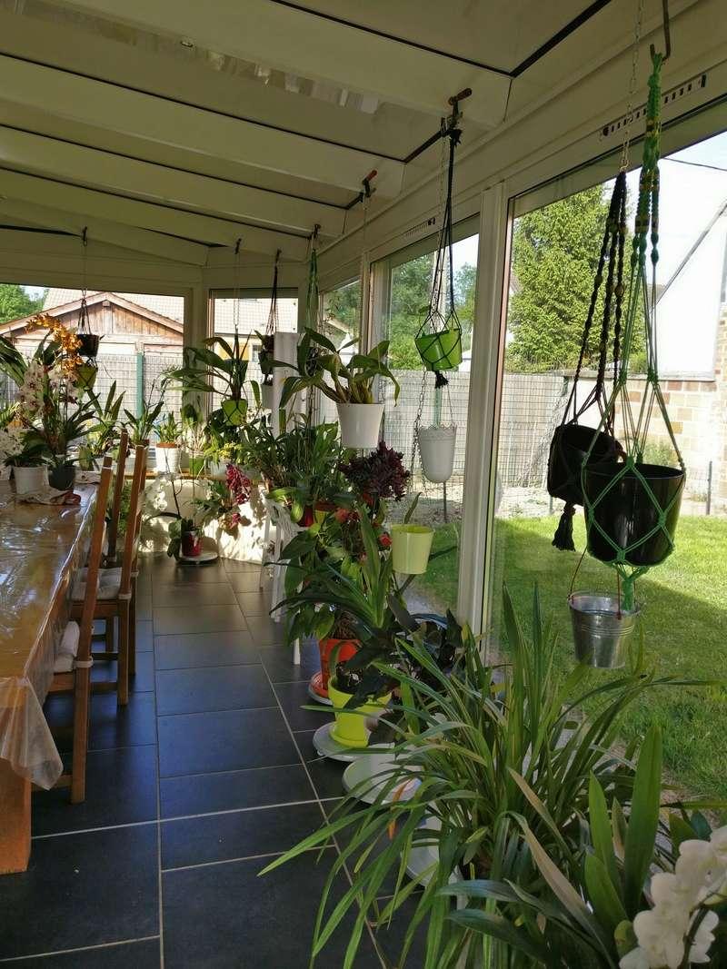 ma véranda, mon petit paradis végétal ... Img_2142