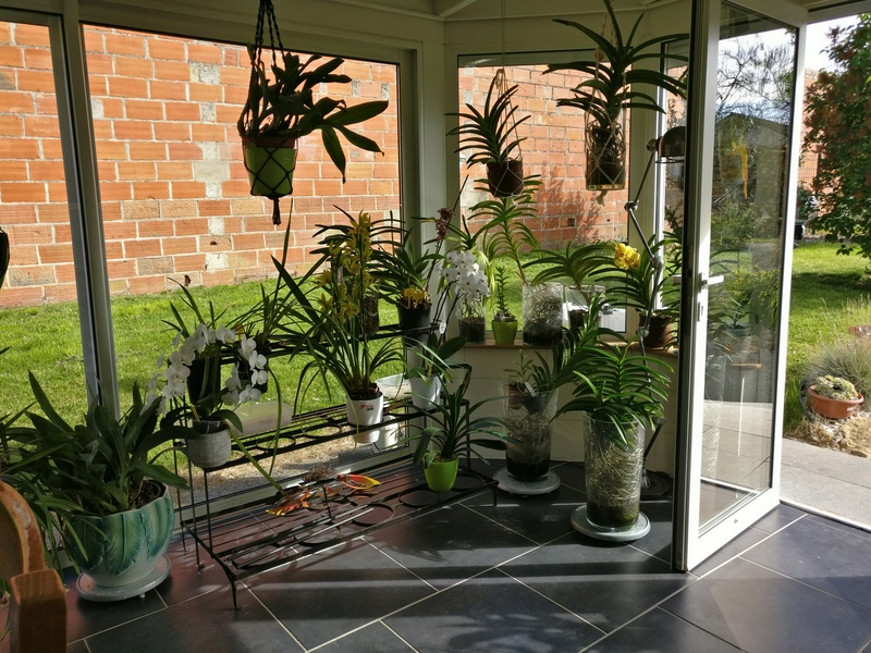 ma véranda, mon petit paradis végétal ... Img_2143