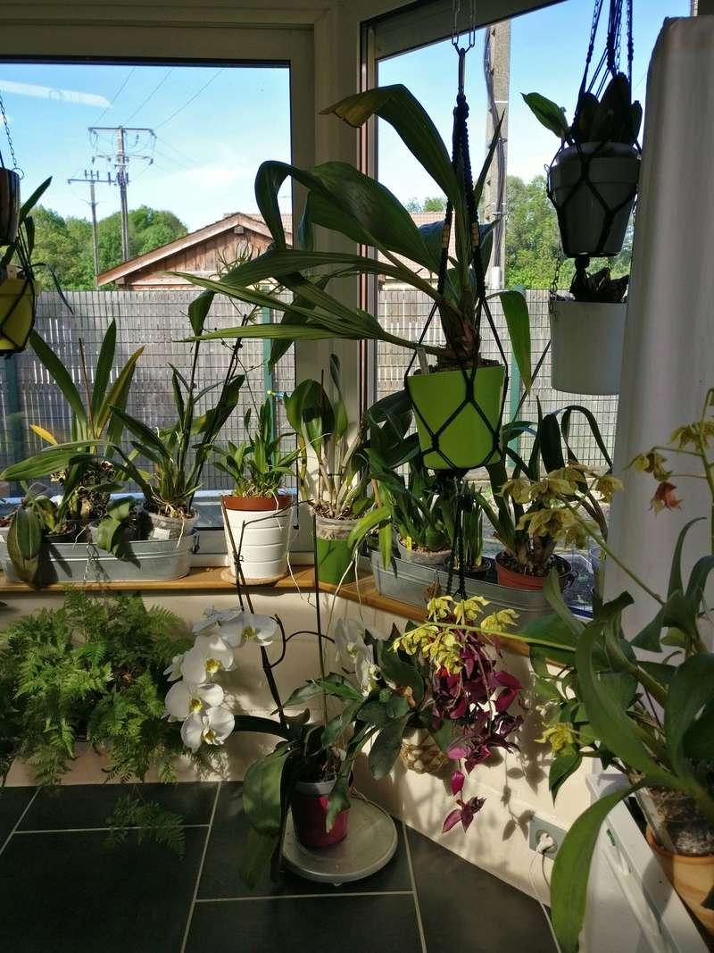 ma véranda, mon petit paradis végétal ... Img_2144