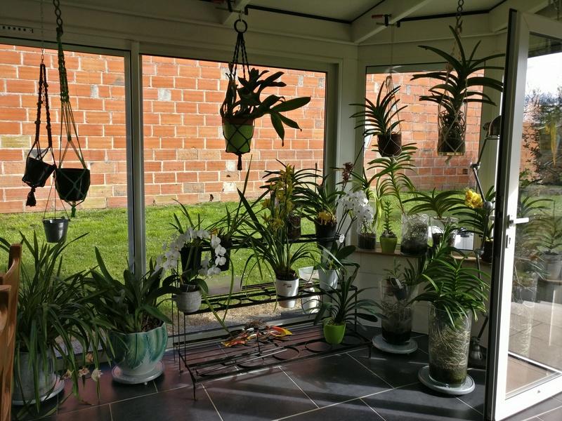 ma véranda, mon petit paradis végétal ... Img_2145