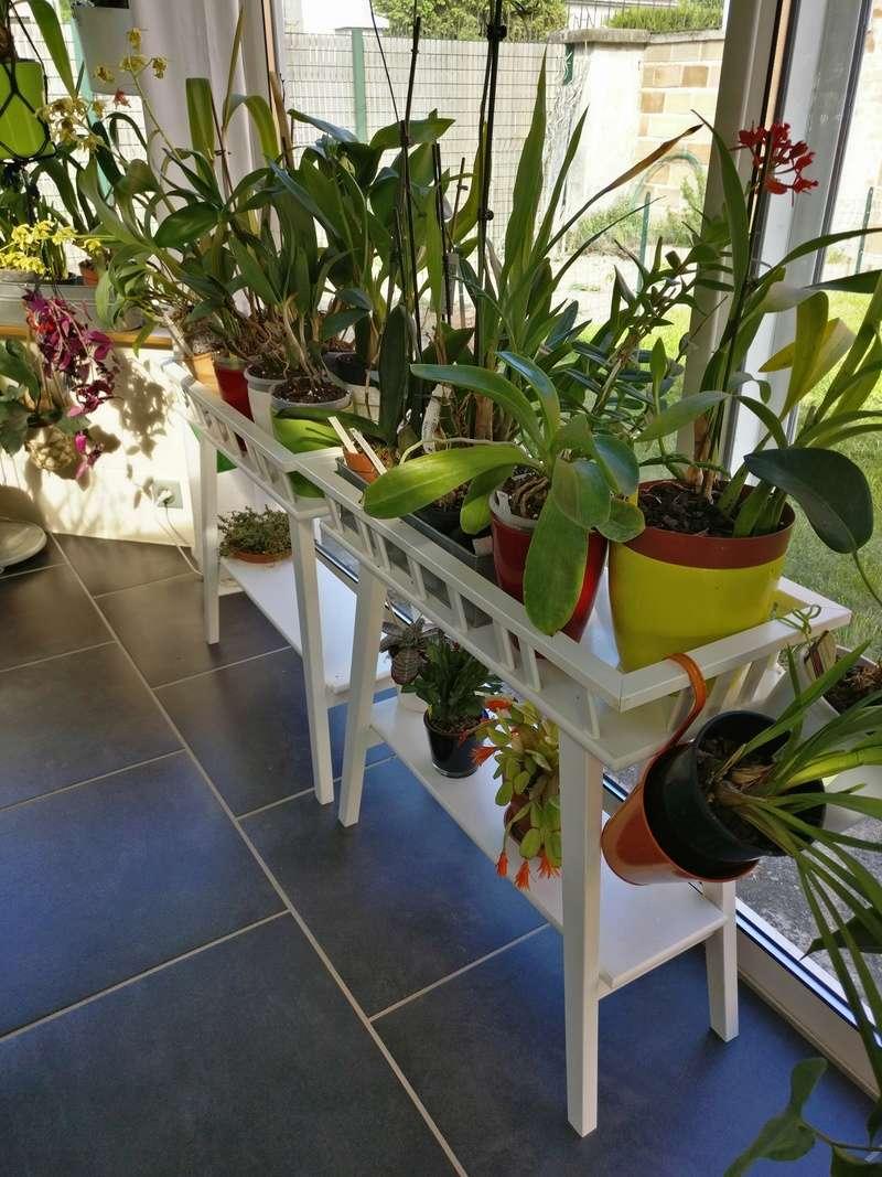 ma véranda, mon petit paradis végétal ... Img_2146