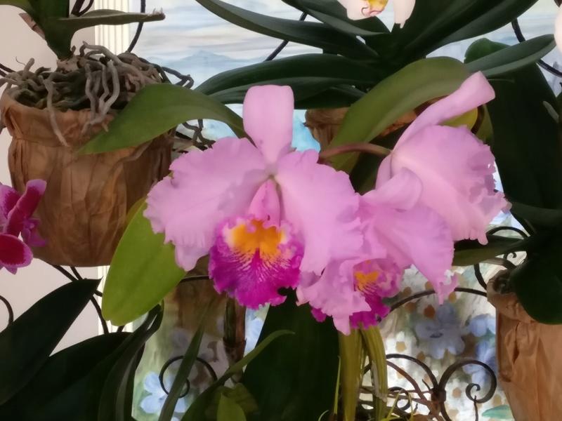 la journée des plantes au domaine de chantilly Img_2152