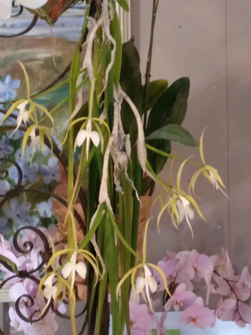 la journée des plantes au domaine de chantilly Img_2153